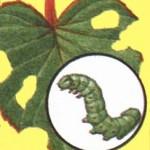 Насекомые-вредители, дача, дом, сад, огород, дачный участок | Дача, дом