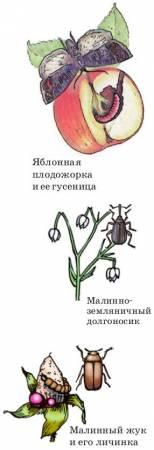 Насекомые – вредители сада и леса