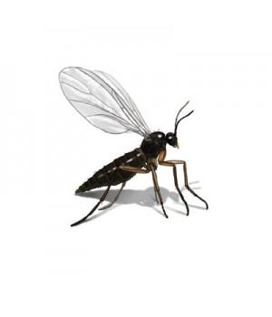 Уничтожение насекомых в Москве » Цены от санитарной службы СоС СЭС