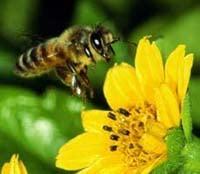 Вредители пчел — это