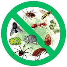 Специализированная служба СЭС по уничтожению насекомых и грызунов