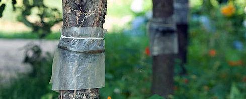 Уничтожение насекомых, вредителей сада