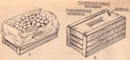 Амбарный клещ: описание и фото