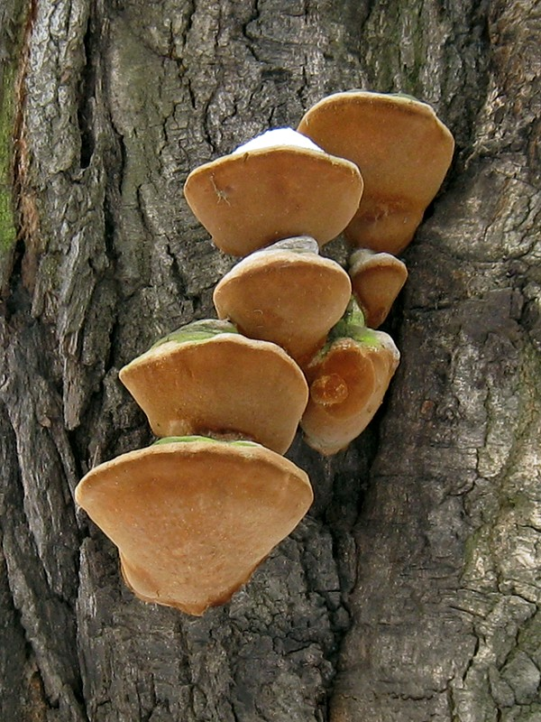 Насекомые-вредители древесины