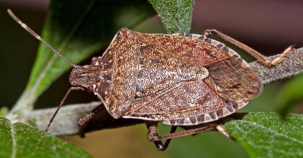 Абхазия и Сочи объединяют силы против насекомых-вредителей; ДИАЛОГ; СОЧИ | Новости Сочи сегодня