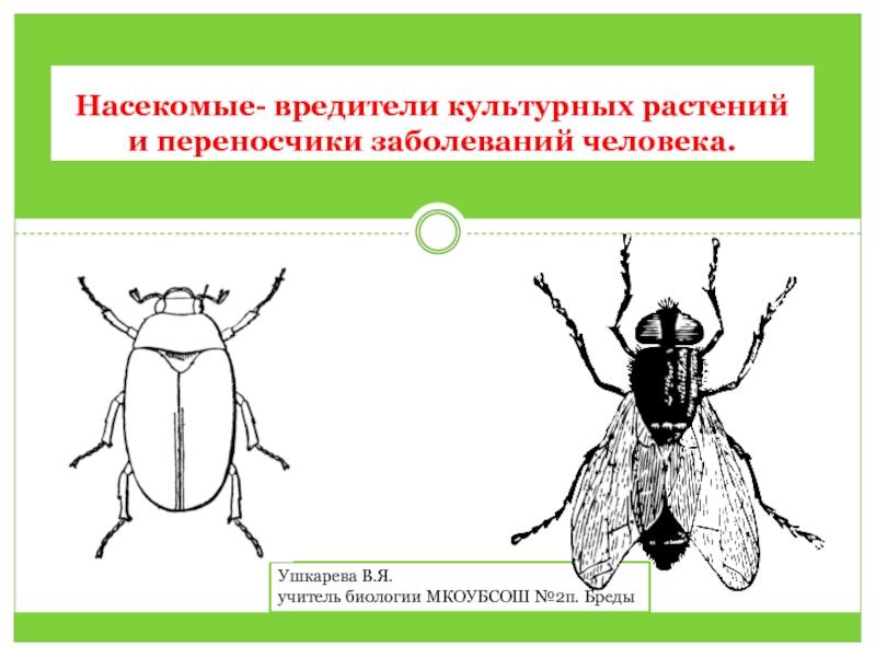 Презентация на тему; Насекомые вредители (7 класс); скачать бесплатно презентации по Биологии