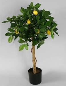 Вредители лимона: от кого беречь деревце? | Сайт о лимонах