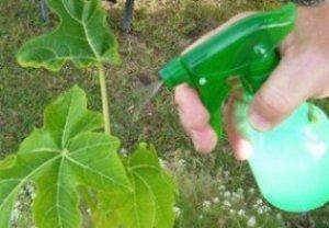 Определение оптимальных сроков проведения химических обработок против вредителей плодовых культур