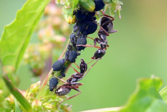 Борьба с насекомыми — методы