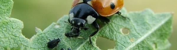 Препараты и средства защиты по борьбе с насекомыми и грызунами