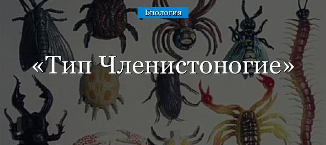 Тип Членистоногие (тема по биологии); какие животные, классы и группа