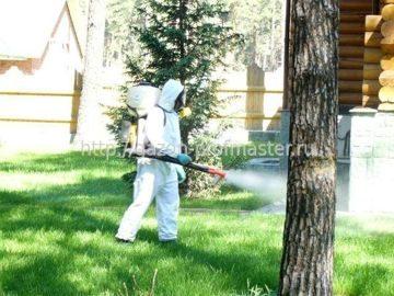 Вредители газона (описание вредителей и методы борьбы)