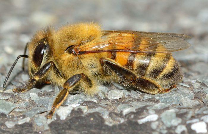 Перепончатокрылые — насекомые