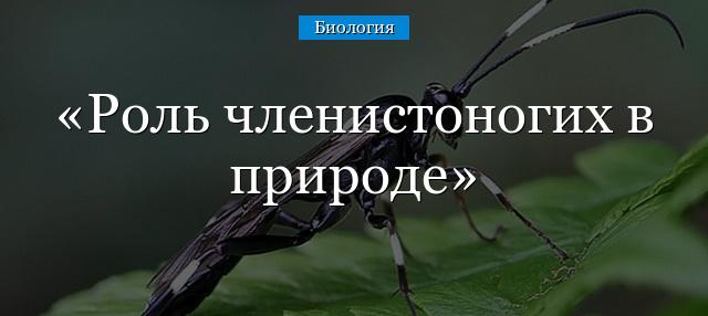 Значение насекомых в жизни человека | Авторская платформа