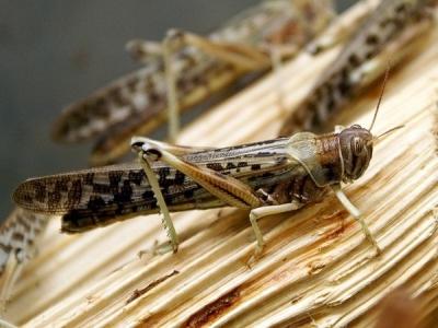 Алматинские микробиологи разводят насекомых для борьбы с вредителями урожая — Новости Казахстана и мира на сегодня