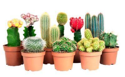 Вредители кактусов и суккулентов — Все о комнатных растениях на
