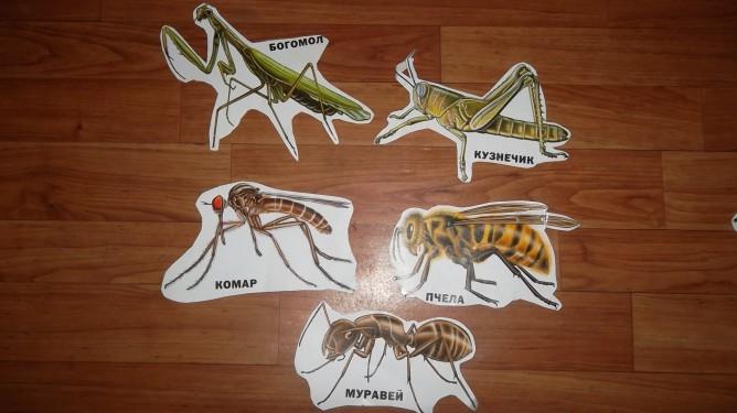Конспект занятия «Кто такие насекомые? »