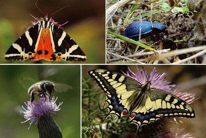 Насекомые, Краткое описание и фото на природе