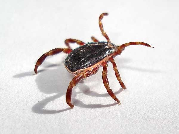 Опасные насекомые и животные Крыма