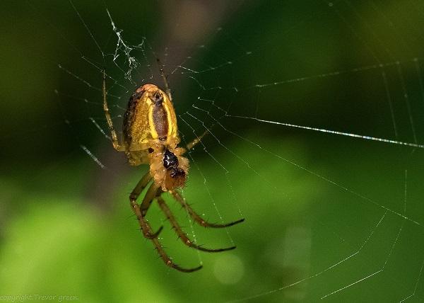 Кто относится к насекомым с неполным превращением? » –