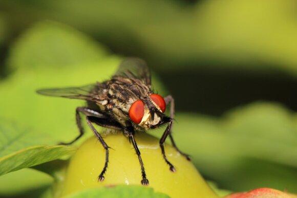 Информация о компании «Производитель средств от насекомых, грызунов и садовых вредителей»