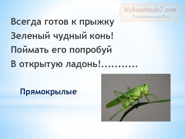 Детские загадки о насекомых для детей с ответами