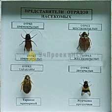 Коллекция энтомологическая «Представители отряда насекомых»