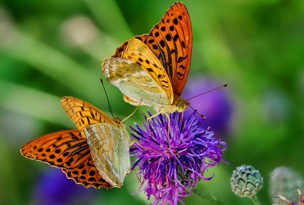 Доклад сообщение; Укусы насекомых и защита от них; что писать?