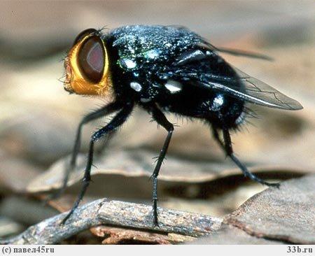 Проект: Наши соседи – насекомые