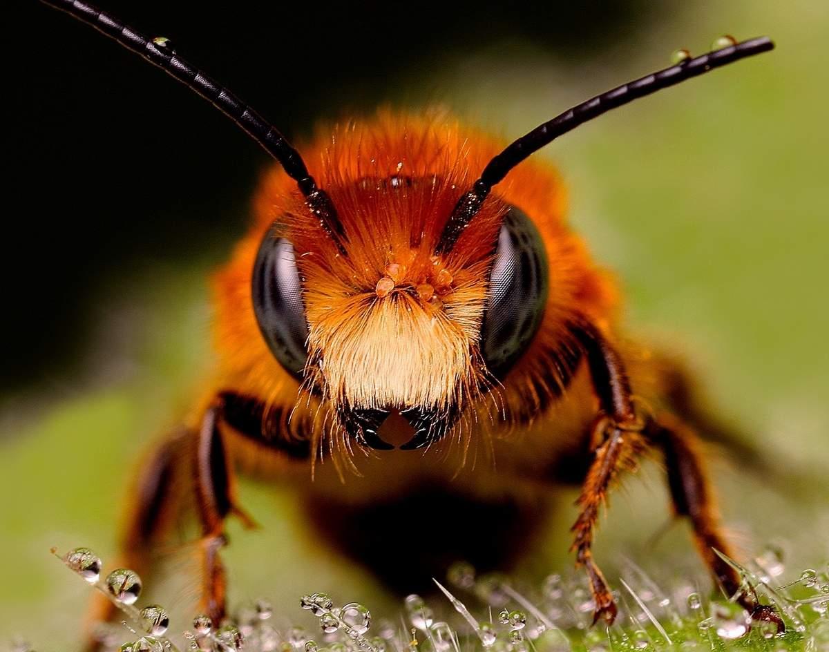 Интересные факты о насекомых и животных