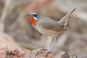 Птицы – властелины воздуха: список интересных представителей, фото и видео — «Как и Почему»