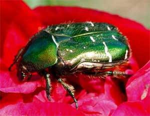 Russische Lesetexte — О насекомых
