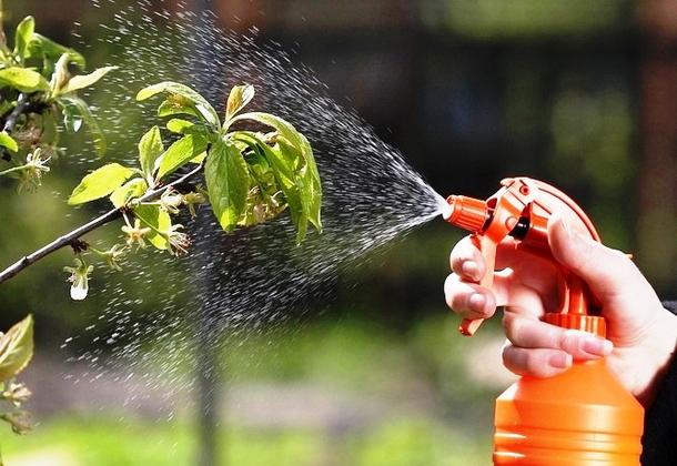 Уничтожение вредителей в доме с помощью натуральных средств |