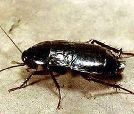 Домашние насекомые-вредители виды и фото домашних паразитов