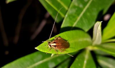 Тараканы избавиться уничтожение тараканов вывести