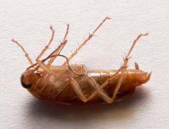 Доклады на тему; Про таракана