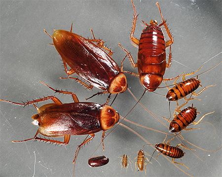 Грызущий тип ротового аппарата насекомых | справочник
