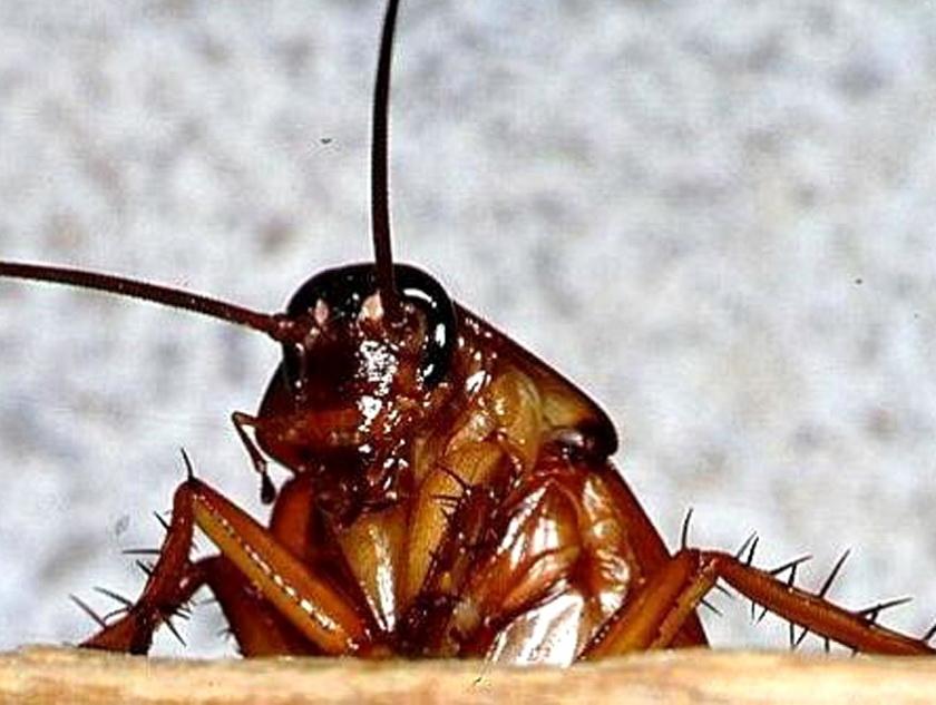 Виды домашних насекомых