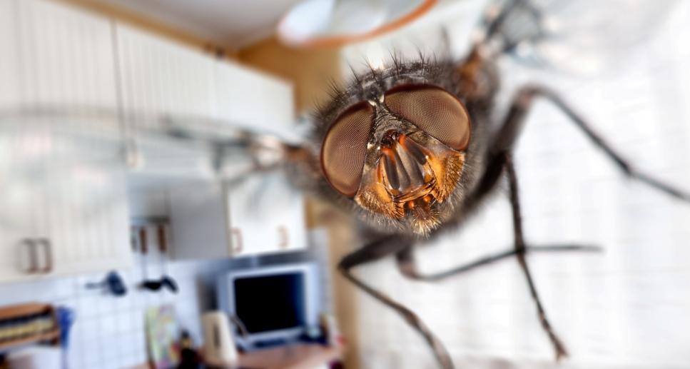 Как распознать вредных насекомых на растениях