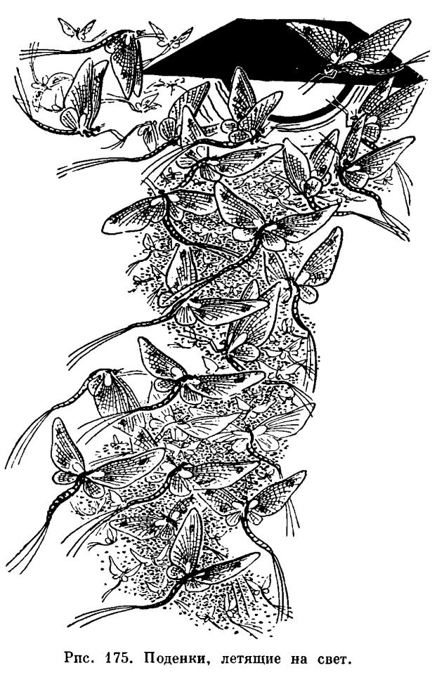 Характеристика отряда насекомых