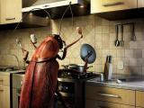 Вопросы по борьбе с тараканами