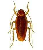 Гель от тараканов: эффективное средство в шприце