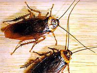 Борьба с тараканами   В коммуналке