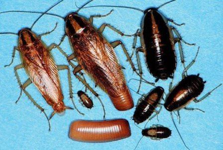 Эффективность электрических средств для борьбы с тараканами