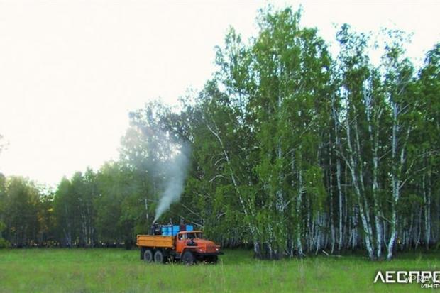 Защита от насекомых вредителей хвойных пород деревьев