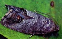 Вредители насекомые