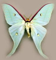 Личинка чешуекрылых насекомых