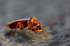 Самое большое насекомое в мире