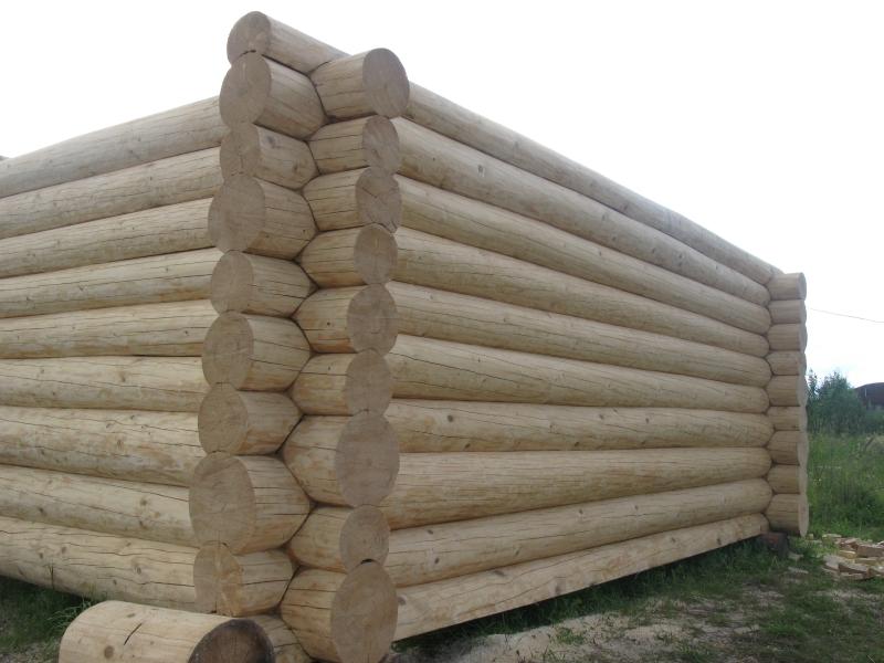 Вредители древесины