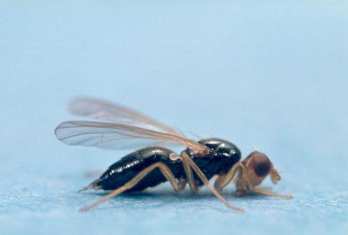 Биологические методы борьбы с вредителями